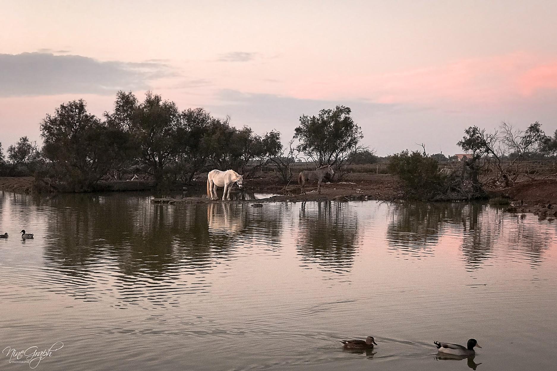 Les Saintes Maries de la Mer, en Camargue