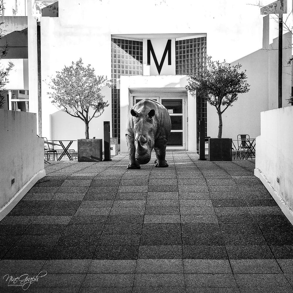 Monochrome, Entrée de l'école de danse à Marseille - Monochrome