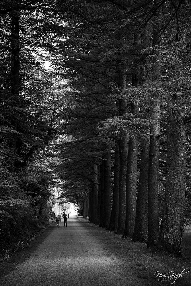 Monochrome, Entrée de la forêt de Saoû - Monochrome