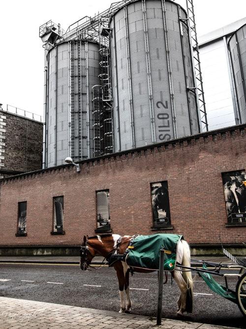 Guinness storehouse, Dublin, Irland, 2018