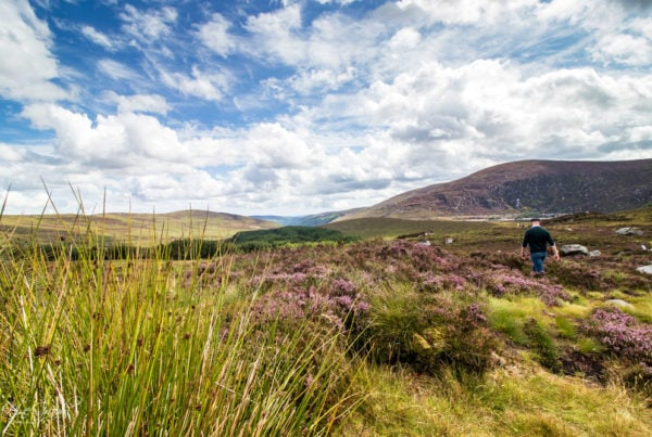 Wicklow, Irland, 2018 (Get Your Guide)