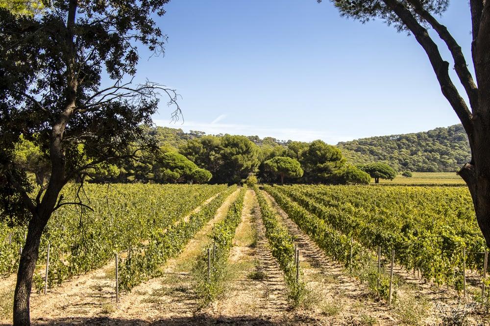 Vignes, Fondation Carmignac, Porquerolles, été 2018